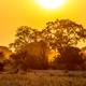 Orange morning light on S100 Kruger - PhotoDune Item for Sale