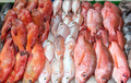 Red snapper and red mullet for sale  - PhotoDune Item for Sale