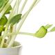 Sweet lupin bean seedlings, closeup - PhotoDune Item for Sale