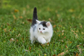 Little white kitten playing on the grass - PhotoDune Item for Sale