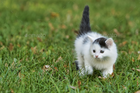 Little white kitten playing on the grass - Stock Photo - Images