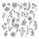 Vintage Flower and Herbs Sketch - GraphicRiver Item for Sale