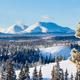Taiga winter snow landscape Yukon Territory Canada - PhotoDune Item for Sale