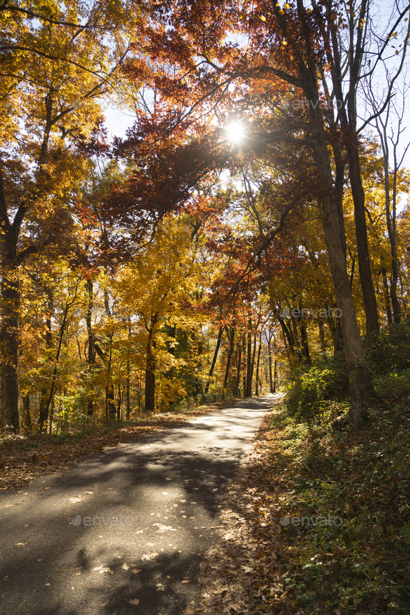 A rural country road travels between trees showing bright fall color - Stock Photo - Images