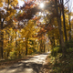 A rural country road travels between trees showing bright fall color - PhotoDune Item for Sale