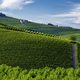 Vineyards near Barolo, Cuneo, in Langhe - PhotoDune Item for Sale