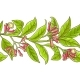 Clove  Branch  Vector Pattern - GraphicRiver Item for Sale