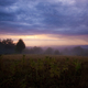 Field with mist in early morning - PhotoDune Item for Sale