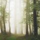 Enchanted magical woods - PhotoDune Item for Sale
