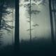 Dark woods background - PhotoDune Item for Sale
