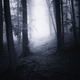 Path through the haunted forest - PhotoDune Item for Sale