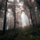 Enchanted magical autumn woods - PhotoDune Item for Sale