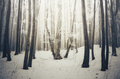 Magical Christmas forest background - PhotoDune Item for Sale