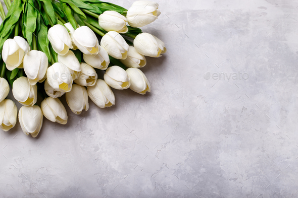 White Tulips Stock Photo By Lana M