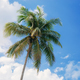 Palm tree with blue sky at sunlight - PhotoDune Item for Sale