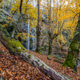 Centennial autumn forest with waterfalls  - PhotoDune Item for Sale