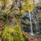 Old tree and waterfall - PhotoDune Item for Sale