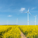 Blooming rapeseed field with wind turbines in the back  - PhotoDune Item for Sale