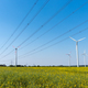 Field of rapeseed with high-voltage lines and wind turbines - PhotoDune Item for Sale