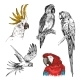 Set of Hand Drawn Parrots - GraphicRiver Item for Sale