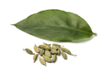 Green cardamom leaf and pods - PhotoDune Item for Sale