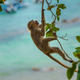 Monkey swing from the tree Crab-eating macaque Macaca fascicular - PhotoDune Item for Sale