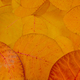 Autumn leaves detail on golden tone. Fall textured background. Horizontal - PhotoDune Item for Sale