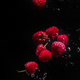 Raspberries falling in water  on a black background. - PhotoDune Item for Sale