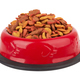 Pet food in bowl. - PhotoDune Item for Sale