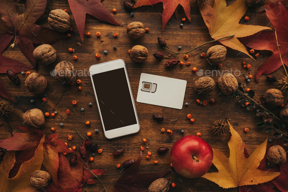 Mobile phone and SIM card with autumn arrangement - Stock Photo - Images