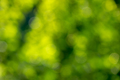 Blurred background is green. Creative natural layout with yellow bokeh circles - PhotoDune Item for Sale