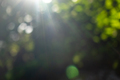 Summer green garden. Beautiful natural blurred bokeh background with bright sun rays - PhotoDune Item for Sale