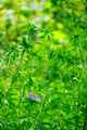 Beautiful summer natural background of green garden in sunny day - PhotoDune Item for Sale