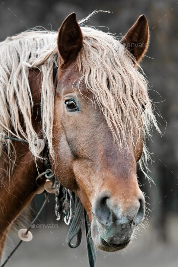 beautiful horse - Stock Photo - Images