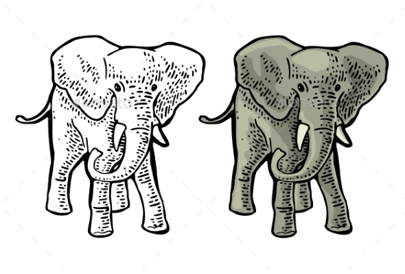 Elephant Engraving Vintage Vector Color