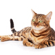 Bengal cat - PhotoDune Item for Sale