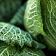 Leaves of a green cabbage on a stall - PhotoDune Item for Sale