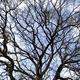 Facing a great oak in winter - PhotoDune Item for Sale