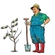 Old Gardener Grows Dollars on a Tree - GraphicRiver Item for Sale