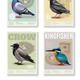 Realistic Bird Banners Set - GraphicRiver Item for Sale