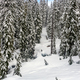 Snow Covered Landscape on Mt. Rainier - PhotoDune Item for Sale
