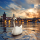 Swan and fiery sunset - PhotoDune Item for Sale