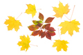 Composition of autumn leaves - PhotoDune Item for Sale