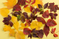 Background of autumn leaves. - PhotoDune Item for Sale