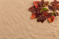 Sand background with autumn leaves. - PhotoDune Item for Sale