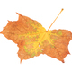 Leaf of maple close-up. - PhotoDune Item for Sale