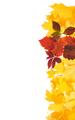 Frame of autumn leaves. - PhotoDune Item for Sale
