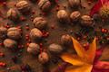 Plenty of walnut in shell, top view - PhotoDune Item for Sale