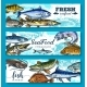 Free Download Vector Fresh Seafood and Fish Banners Set Nulled