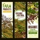 Farm Grown Cereals and Grain Vector Banner Set - GraphicRiver Item for Sale